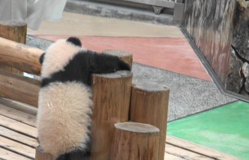 丸太の上で竹のお稽古に励む彩浜1(1).jpg