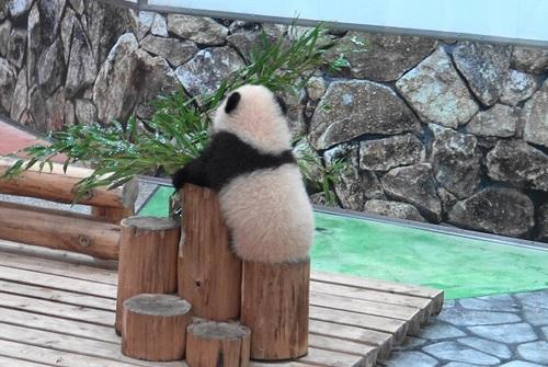 丸太の上で竹のお稽古に励む彩浜1(12).jpg
