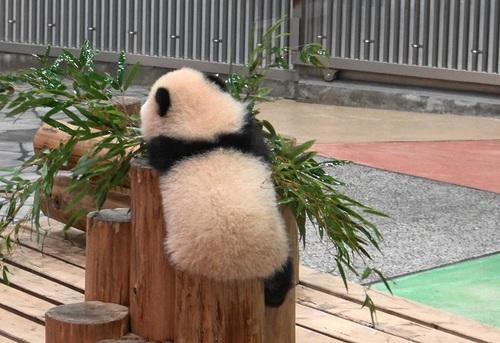 丸太の上で竹のお稽古に励む彩浜1(5).jpg